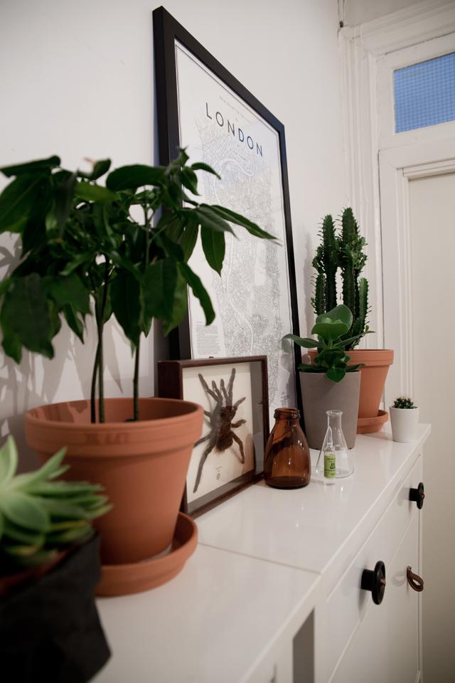 grønne planter i gangen