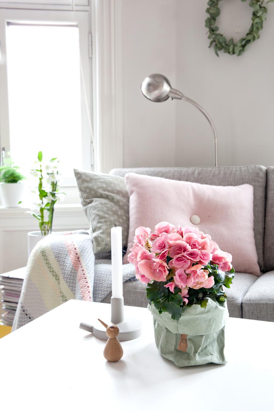 blomstrende potteplanter i stue