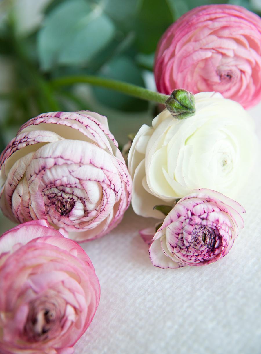 rosa ranunkler