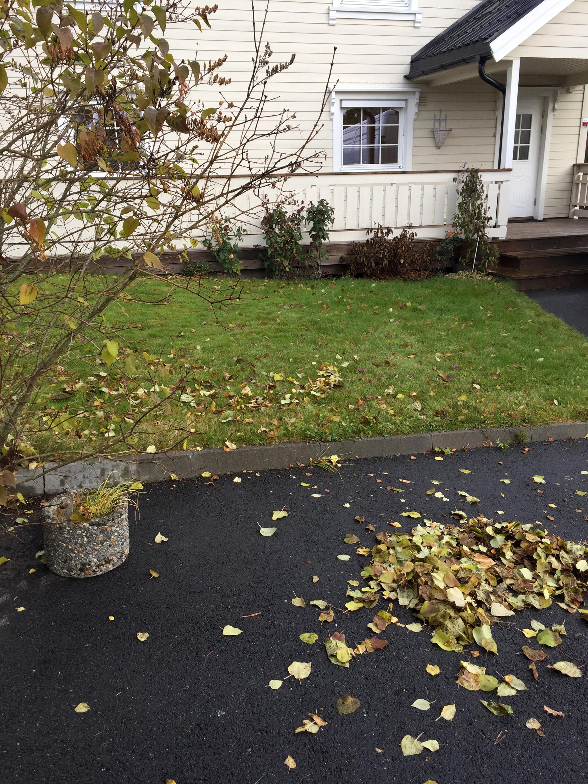 hus høst løv